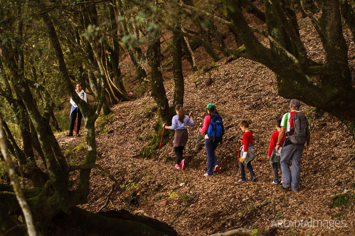 Hiking at Foloi (Pholoe) oak forest