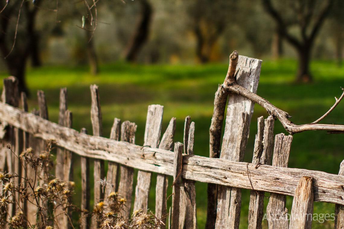 An old fence at Foloi (Pholoe) forest
