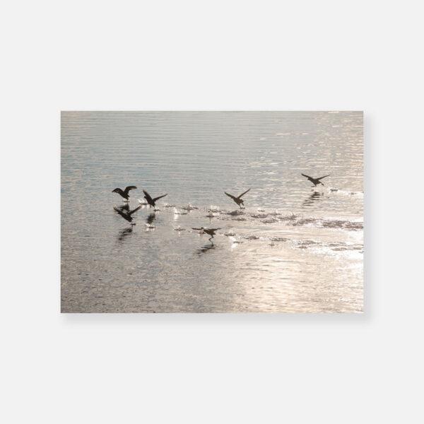 Φτεροκόπημα στο Μουστό - © Θεόδωρος Παπαγεωργίου